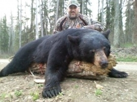Perhaps the largest bear this spring, over 450 pounds which is always huge for any spring bear after hibernation. Mike and his guide made their successful stalk and acquired a position that allowed the perfect shot. Spot and stalk hunts, what can anyone say if they want this size of bear! What a great trophy for anyone and our hunter added this guy to his first for a successful 2 bear hunt.