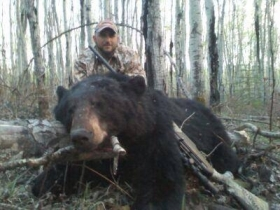 Vinie put a 650 yard stalk on this great black, as he crested the hill the bear was only seventy yards away. Vinie didn't make any mistakes he had his first Alberta black bear on the ground.