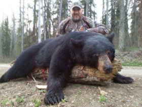 When Mike and his friends came to hunt bears with us they were a little skeptical after their last guided bear hunt, it didn't take long for the skepticism to go away after taking this fantastic 350lb black . A two hundred and fifty yard stalk and a 165 yard shot the trophy was Mike's .