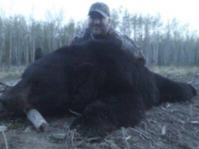 After a thousand yard stalk and a 55yard shot All Mike could say when he walked up to his secound bear was (oh my God oh my, dude oh my, dude you can't belive this oh my! you have to be kidding me oh my!) What a perfect way to end a spot and stalk hunt with a 450 lb black.