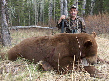 Brown Bear in Alberta